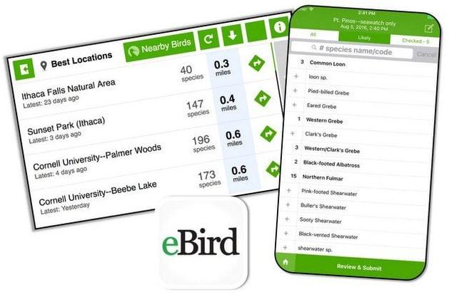 Birding Apps eBird