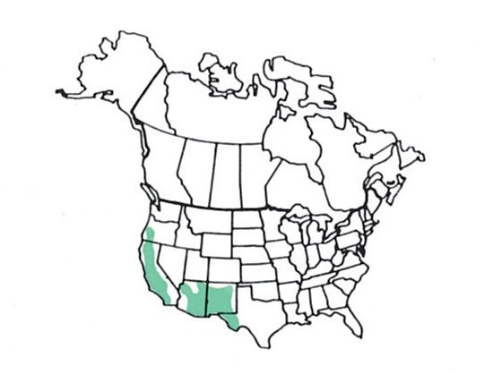 acorn woodpecker range map