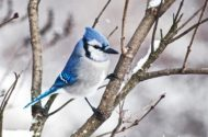 21 Simple Tips to Attract Winter Birds