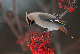 Bird Irruption: A Sudden Surge of Birds