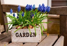 How to Grow Flowers Indoors in Winter