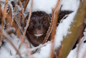 How to Spot Common Winter Wildlife
