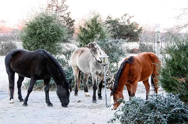 three horses eating from a bird feeder