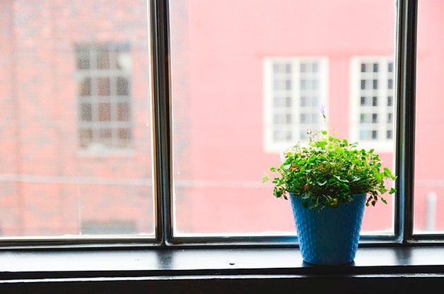 plant in blue pot on window sill