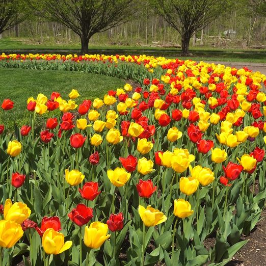 9 Best Websites for Buying Flower Bulbs Online
