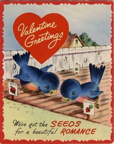 Bird Lovers Valentine Cards Bluebirds