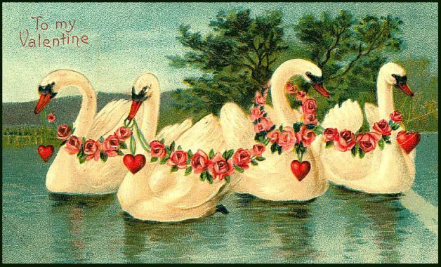 Bird Lovers Valentine Cards Swans