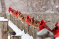 51 Best Winter Bird Photos Ever