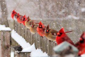 51 Best Winter Bird Photos Ever