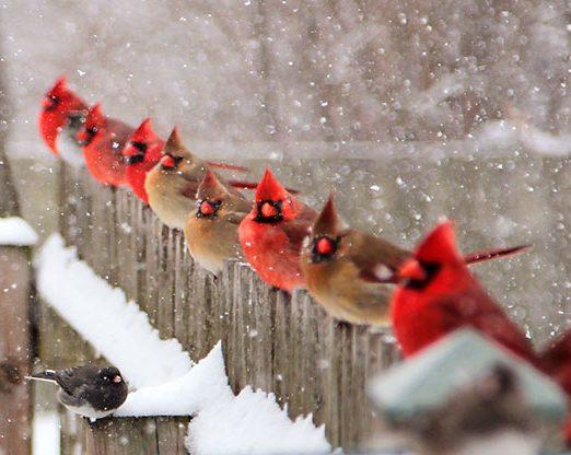51 Best Winter Bird Photos