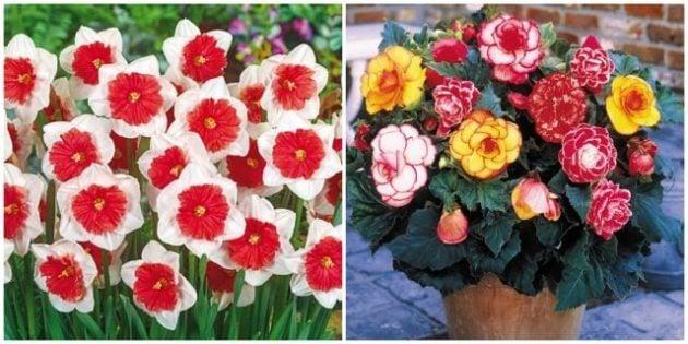 Flower Bulbs Eden Brothers