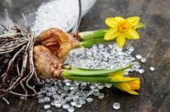 7 Sensational Sources for Flower Bulbs