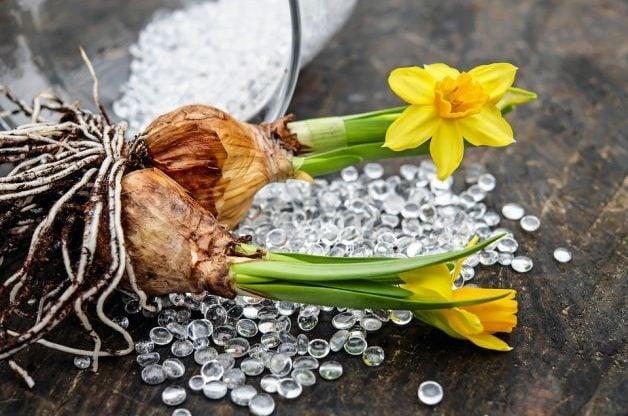 Flower Bulbs Lead
