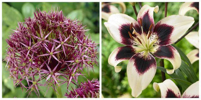 Flower Bulbs Longfield Gardens
