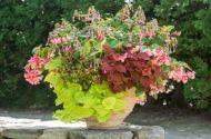 Create a Hummingbird-Friendly Plant Combo