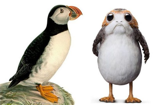 Puffin to Porg Wilhelm von Wright DK Publications