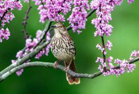 Bird Mimics and Mimicry: Three Birds to Know