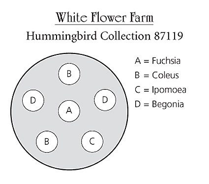 Hummingbird container plan from White Flower Farm.
