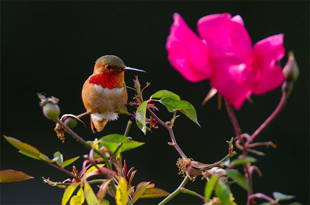 Hummingbirds love pink and red flowers.