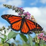5 Basic Butterfly Behaviors to Know