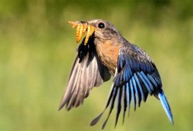 Caption This! A Mouthful of Mealworms