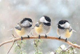 Where Do Birds Sleep At Night? // Ask the Bird Experts