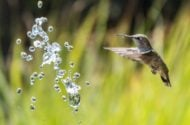 Attract Hummingbirds Levi Jones Unsplash