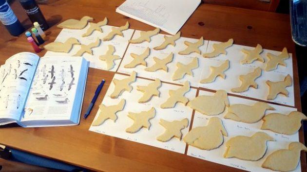 BotM Bird Cookies Layout