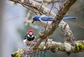 Caption This! A Bird Staredown