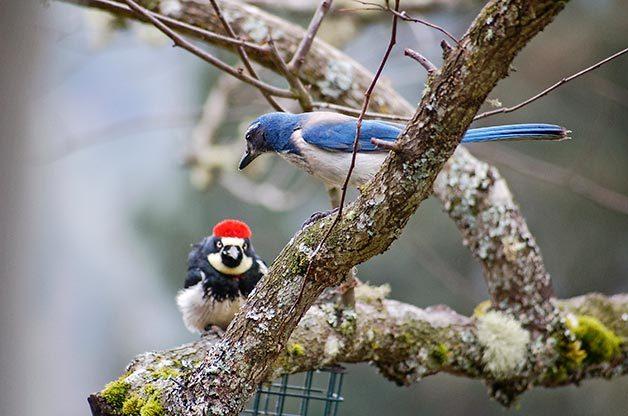 Birds Blooms Blog