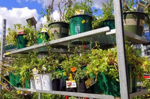 Cheap Plants