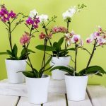 Orchids 101: Guide to Orchid Care