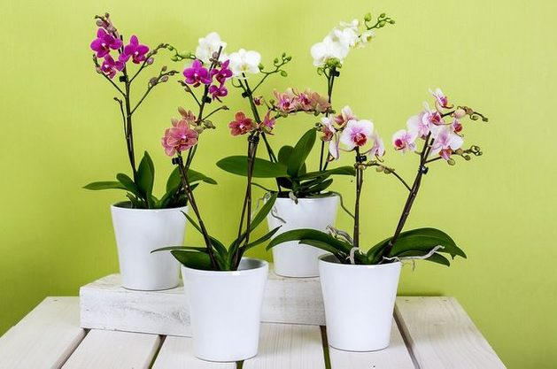 Orchid Care Pixabay RainerBerns