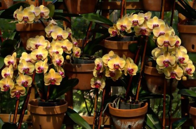 Orchid Care Pixabay eyeImage