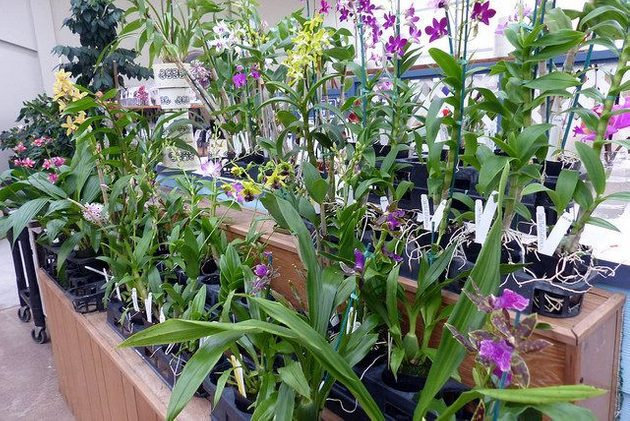 Orchid Care for sale