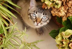 9 Poisonous Plants Every Cat Owner Should Avoid