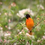 8 Surprising Facts About Orioles