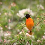 10 Surprising Facts About Orioles