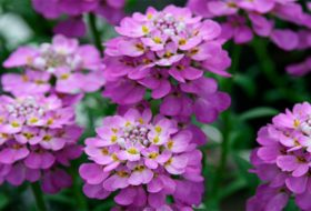8 Early-Blooming Flowers for Spring