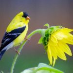 15 Common Backyard Birds You Should Know