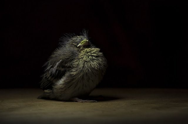 Baby Birds Pixabay oudba_msi