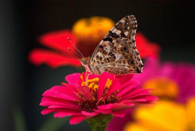 Butterfly Flowers KIMDAEJEUNG pixabay