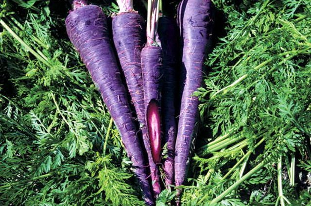 Eat the Rainbow Purple Carrot Park Seed