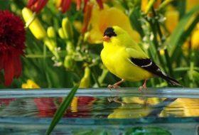 15 Common Backyard Birds to Know