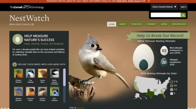Backyard Citizen Science Nestwatch