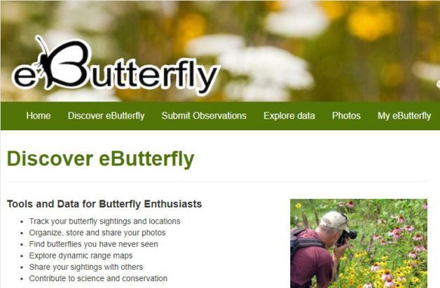 Backyard Citizen Science eButterfly