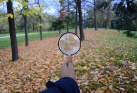 Backyard Citizen Science for Nature Lovers