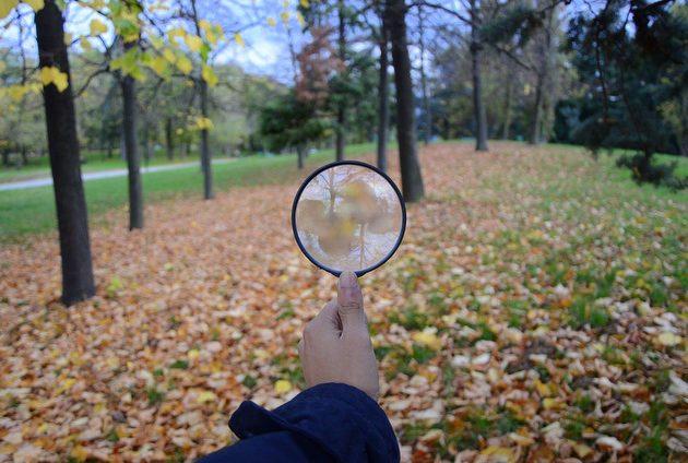 Backyard Citizen Science kevinbism pixabay