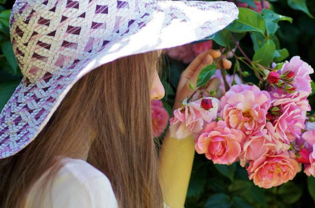 Fragrant Roses Pixabay