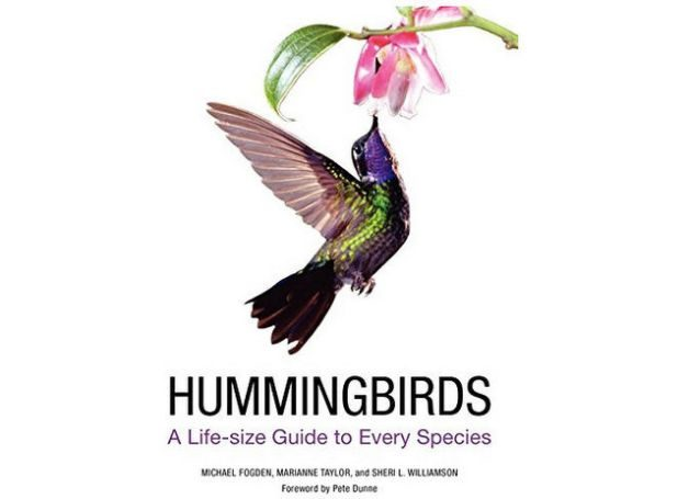 Hummingbird Gifts Complete Guide